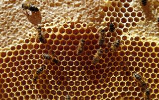 Panal de miel operculada y abierta. Miel de la Marquesa