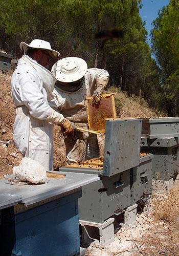 Revisando las colmenas antes de catar
