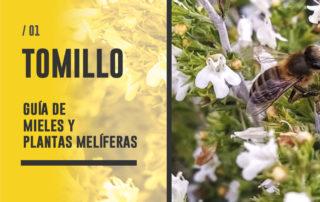 Planta y Miel de Tomillo