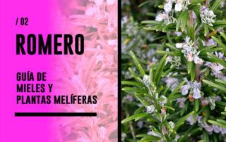 Romero. Guía de mieles y plantas melíferas
