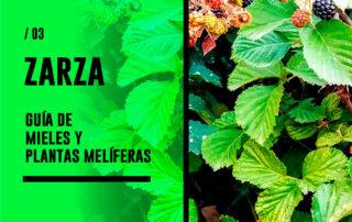 Zarza. Guía de mieles y plantas melíferas
